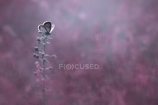 Закриття метелика на квітці в полі, Індонезія. — стокове фото