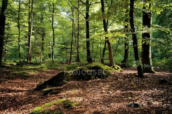 Bosque, Ihlow, Frisia Oriental, Baja Sajonia, Alemania - foto de stock