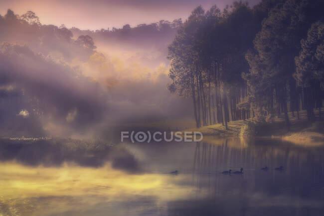 Anatre che nuotano su un lago nella foresta nella nebbia mattutina, Italia — Foto stock