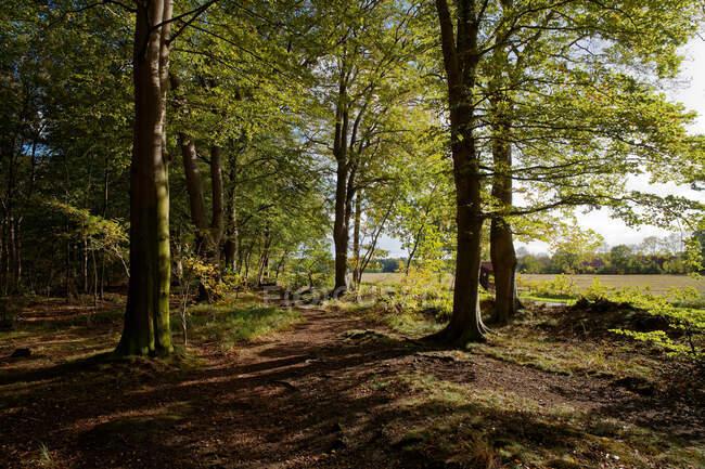 Forest, Stiekelkamp, Frisia orientale, Bassa Sassonia, Germania — Foto stock