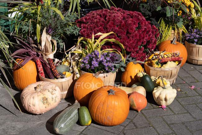 Decoraciones de calabaza, calabaza y mazorca de maíz de otoño - foto de stock