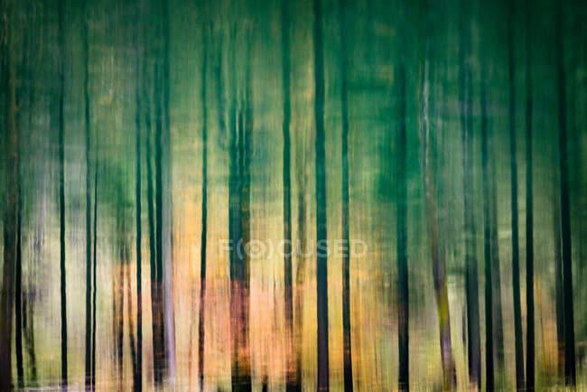 Reflet de la cime des arbres dans le lac Gosausee près de Gosau, Salzkammergut, Autriche — Photo de stock
