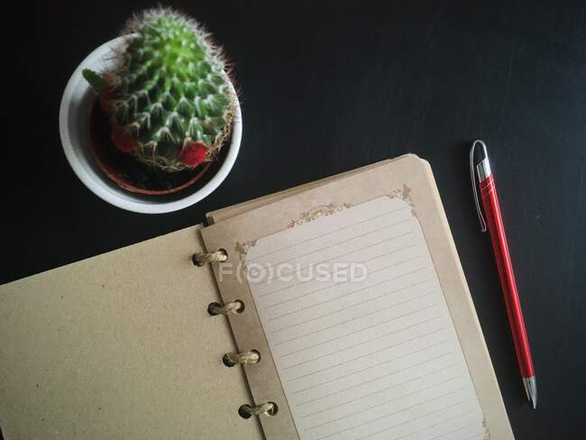 Overhead view of an open notebook and pen next to a cactus — Stock Photo