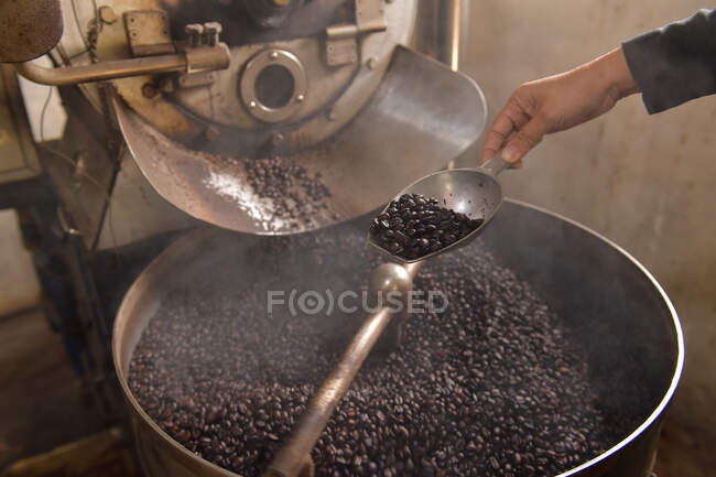 Woman holding coffee beans in hand.Coffee beans in various stories.Close-up of the hands of a girl who sprinkles roasted coffee beans. — Stock Photo