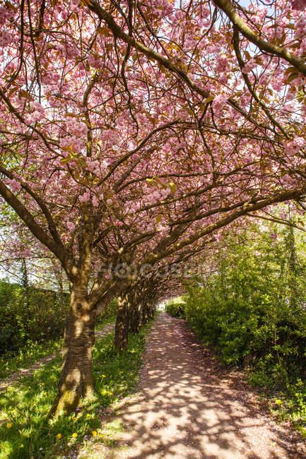 Paisaje de primavera con hermosos árboles de magnolia florecientes en el parque en el jardín - foto de stock