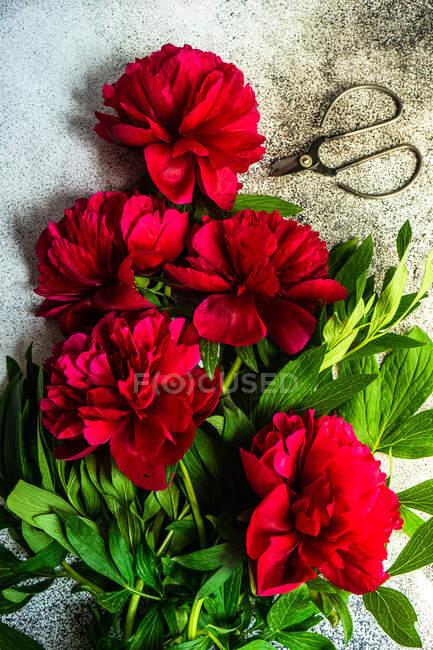 Летняя рамка с ярко-красными пионскими цветами на бетонном фоне — стоковое фото