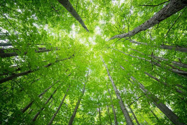 Прекрасний зелений ліс з деревами. — Stock Photo