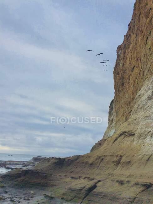 Stormo di uccelli che volano sopra scogliere di arenaria a Moss Beach, Monterey, California, USA — Foto stock